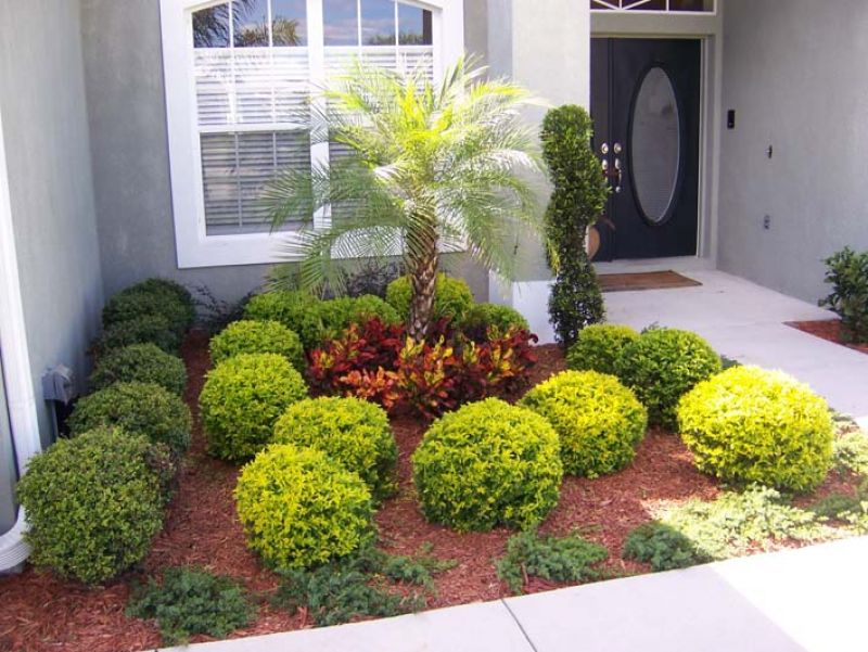 Green Shrubs brighten up a bland house wall