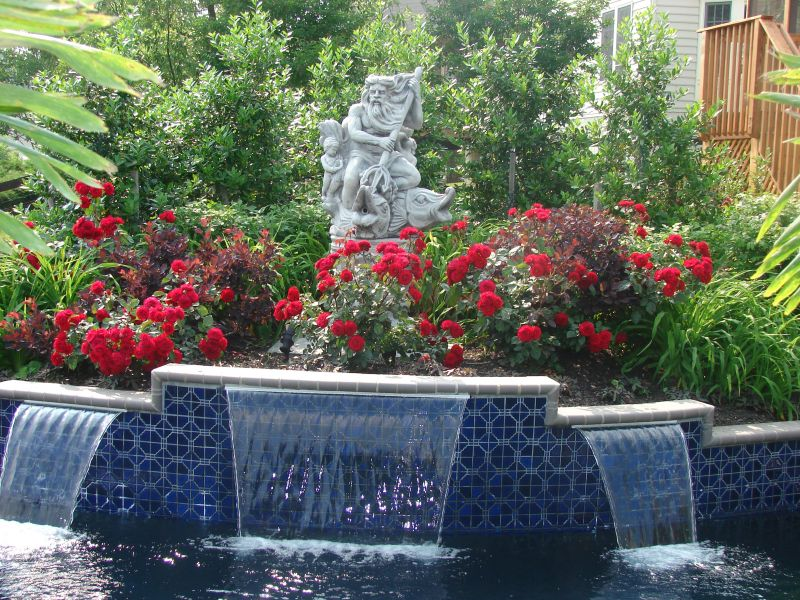 Roses in pool landscaping