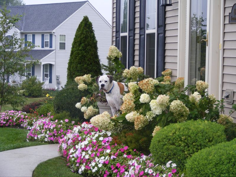 Front Yard Easy Landscaping Ideas Part - 49: Small Front Yard Landscaping Ideas