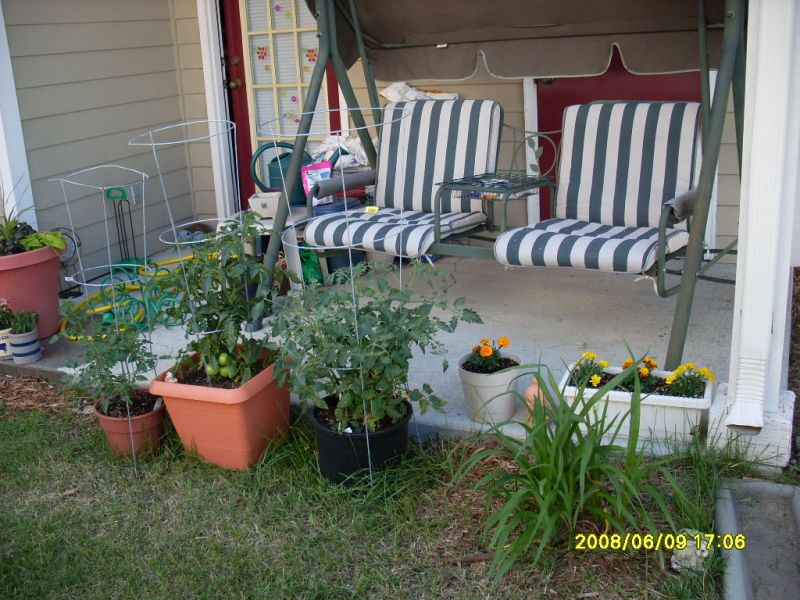 Vegetable Container Garden