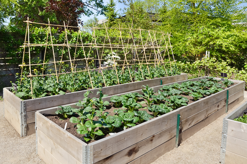 Small yard big yield growing vegetables in a limited for Raised vegetable garden